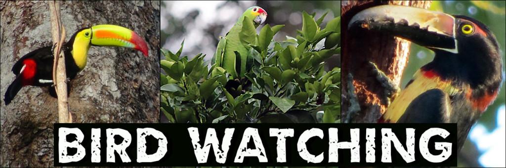 BIRDWATCHING TOURSITE